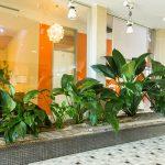 Innenraumbegrünung im Foyer - automatisch bewässert und gedüngt. Die Pflanzen danken es mit Gesundheit & leuchtendem Grün
